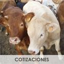 cotizaciones